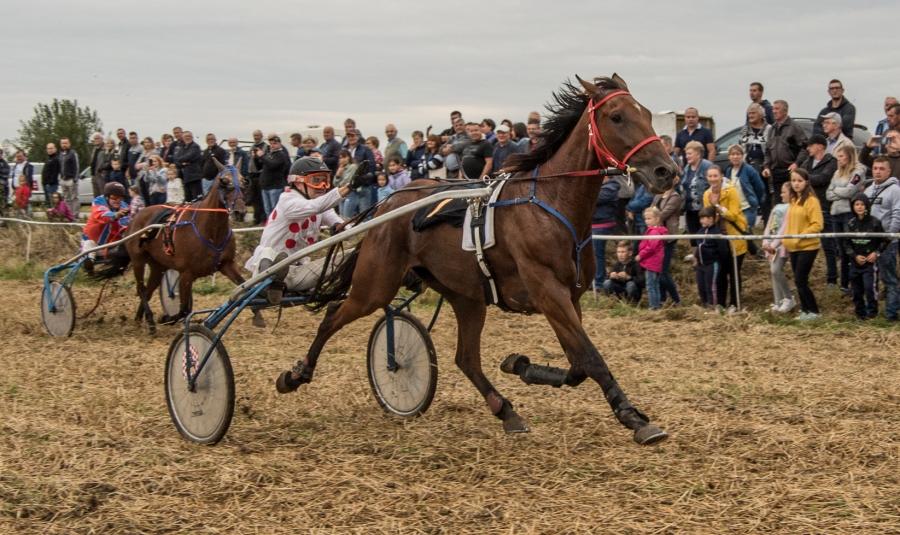 Pierwsze w tym roku wyścigi koni rasy małopolskiej